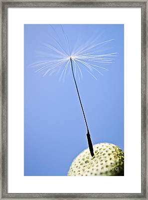 Last Dandelion Seed Framed Print by Elena Elisseeva