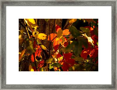 Last Days Of Summer Framed Print