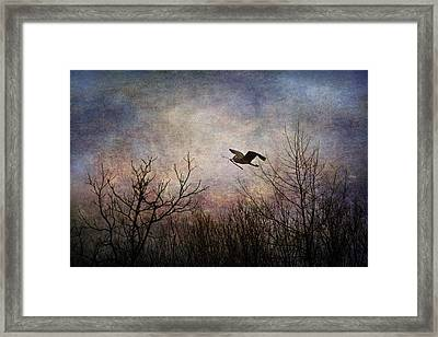 Last Delivery Of The Day Framed Print