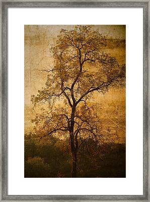Last Fall Framed Print by Lena Wilhite