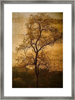 Last Fall Framed Print