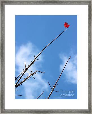 Last Leaf Standing Framed Print