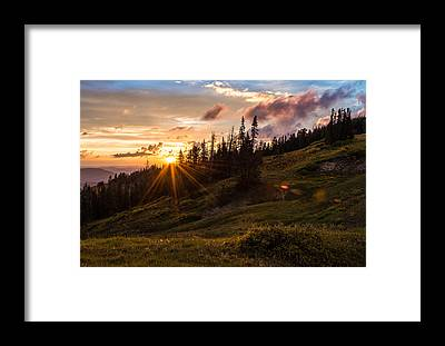Cedar Framed Prints