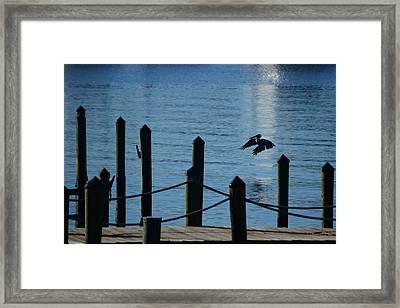Last Light Flight Framed Print