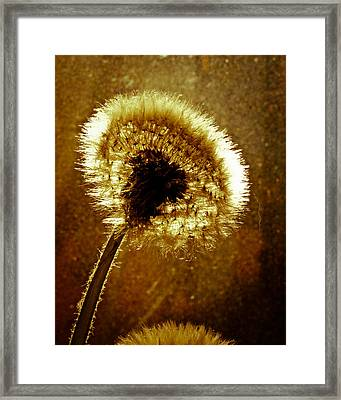 Last Light Of Day Framed Print by Bob Orsillo