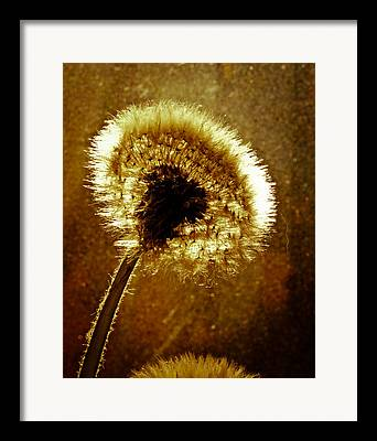 Going To Seed Framed Prints
