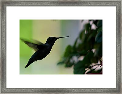 Last Meal Of The Day Framed Print
