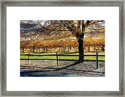 Last Of The Autumn Leaves Framed Print by Carol Groenen