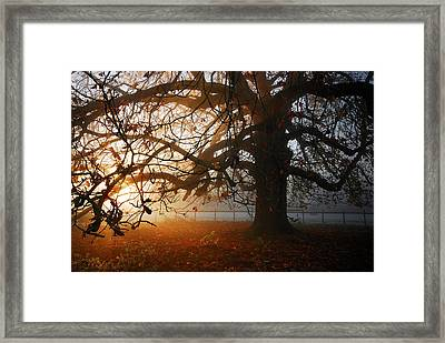 last of the Autumn wine Framed Print