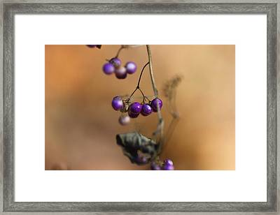 Last Of The Berries Framed Print by Katherine White