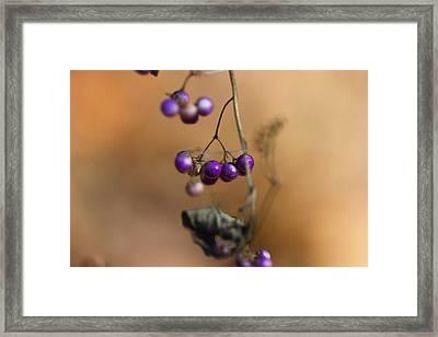 Last Of The Berries Framed Print