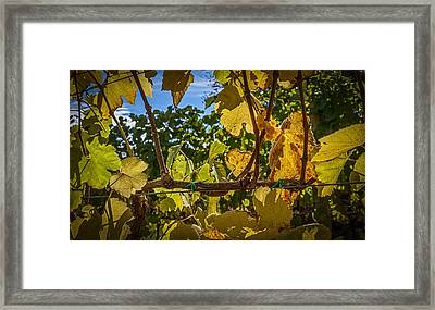 Last Of The Harvest Framed Print by David Cote