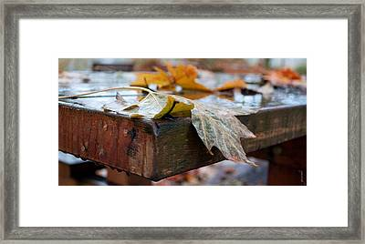 Framed Print featuring the photograph Last Of The Leaves by Gwyn Newcombe