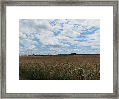 Framed Print featuring the photograph Last Of The Poppies by Pema Hou