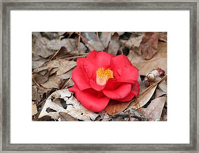 Last Of The Season Framed Print