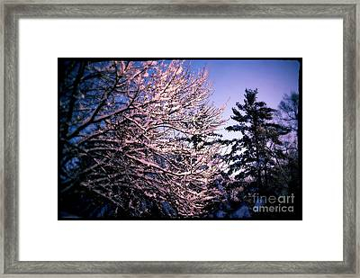 Last Peek Of Winter Sun Framed Print