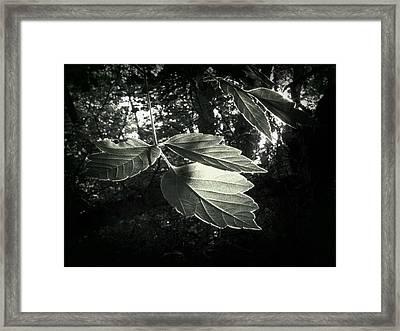 Last Rays II Framed Print