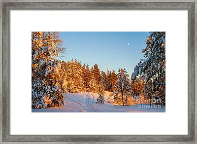 Last Rays Of Light In The Winter Forest Framed Print