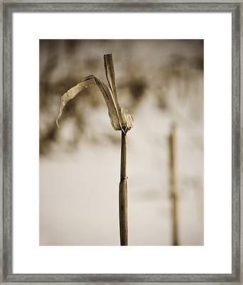 Last Standing Framed Print by Christi Kraft