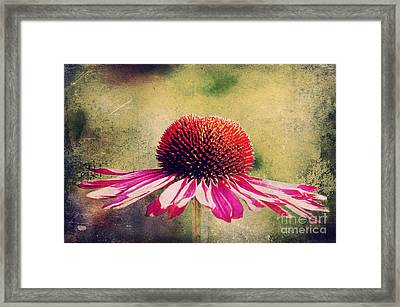 Last Summer Feeling Framed Print by Angela Doelling AD DESIGN Photo and PhotoArt