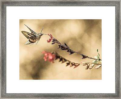Last Thoughts Framed Print by Cecil K Brissette