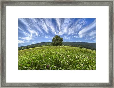 Last Tree Framed Print by Debra and Dave Vanderlaan