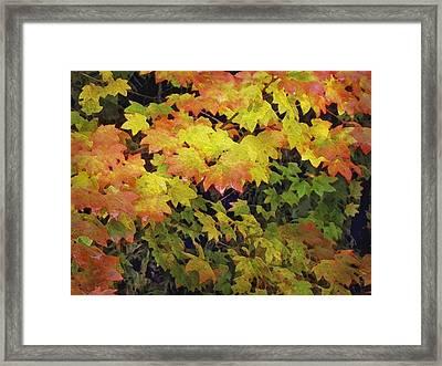Last Year's Autumn Leaves Framed Print