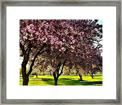 Late Afternoon At Lake Park Framed Print