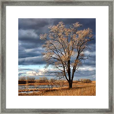 Late Afternoon At Walnut Creek Lake #1 Framed Print by Nikolyn McDonald