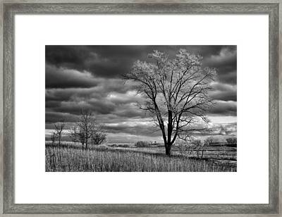 Late Afternoon At Walnut Creek Lake #2 - Black And White Framed Print by Nikolyn McDonald