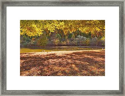 Late Afternoon Autumn Sunshine At The Lake Framed Print