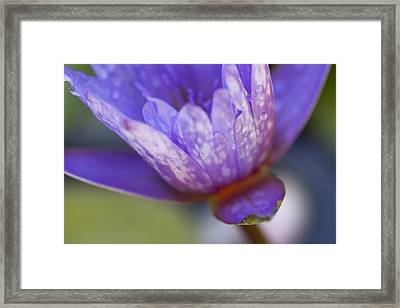 Late Afternoon Dream Framed Print