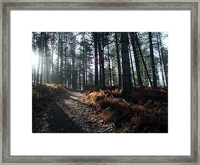 Late Afternoon On Cannock Chase Framed Print by Jean Walker