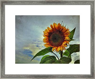 Late August Sun Framed Print