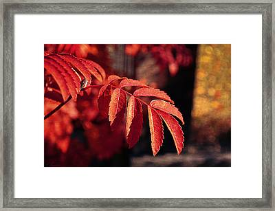 Late Autumn Colors Framed Print by Maria Angelica Maira