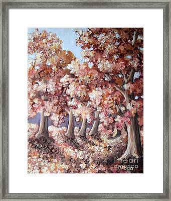 Late Autumn Maples Framed Print