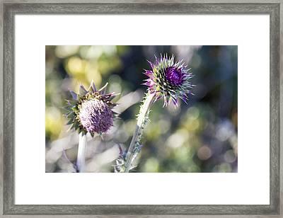 Late Bloomers Framed Print by Dana Moyer