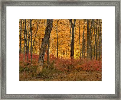 Late Day Autumn Light Framed Print by Stephen  Vecchiotti