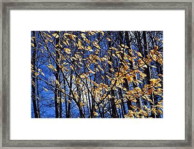 Late Fall Framed Print