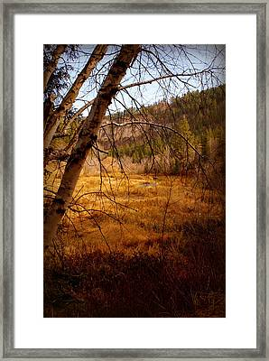 Late Fall Framed Print by Jerry Cahill