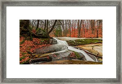 Late Fall On The Forest Floor Framed Print by Jeremy Farnsworth