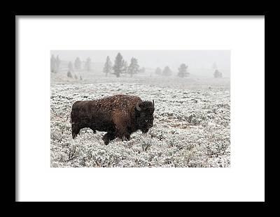 Yellowstone Park Framed Prints