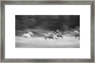 Late For Breakfast Framed Print by Dianne Arrigoni