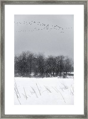 Late Migration Framed Print by Michele Steffey