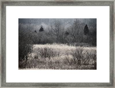 Late November In Black And White Framed Print by Mary Machare