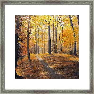 Late October Light And Shadow Framed Print by David Bottini