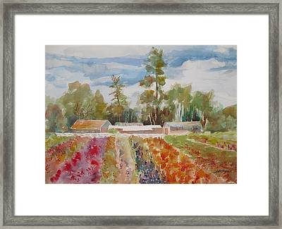 Late Season Exhibit  Framed Print
