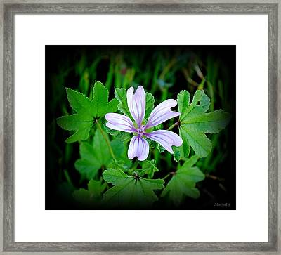 Framed Print featuring the photograph Late Summer Beauty by Marija Djedovic