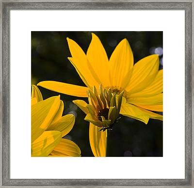 Framed Print featuring the photograph Late Summer Blooms by Michael Friedman