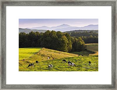 Late Summer Countryside Framed Print